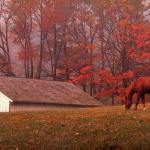 Beautiful Autumn Horses Wallpapers Wallpaper Cave