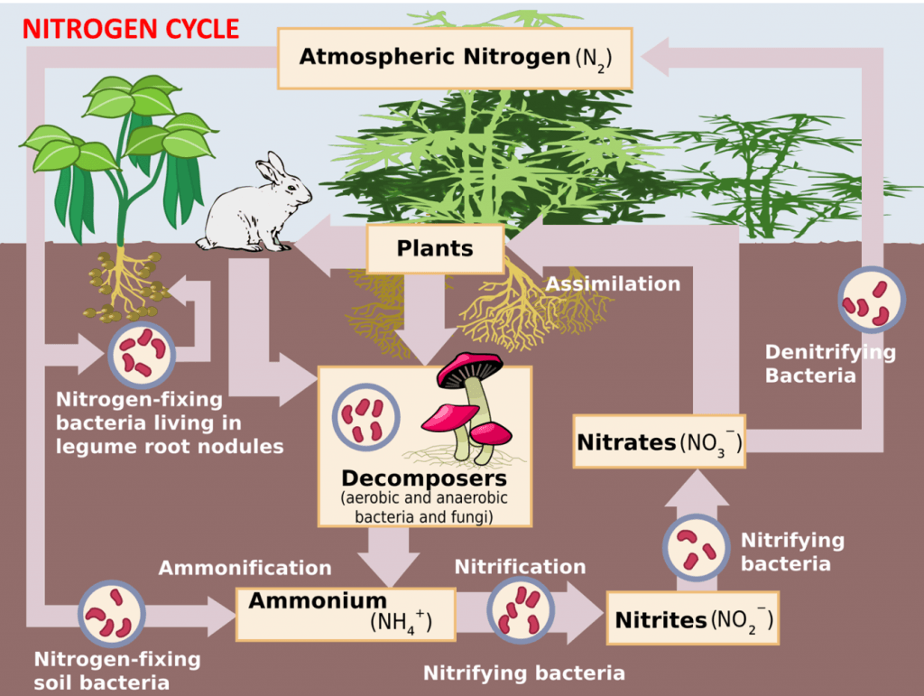 Nitrogen Cycle Wallpapers