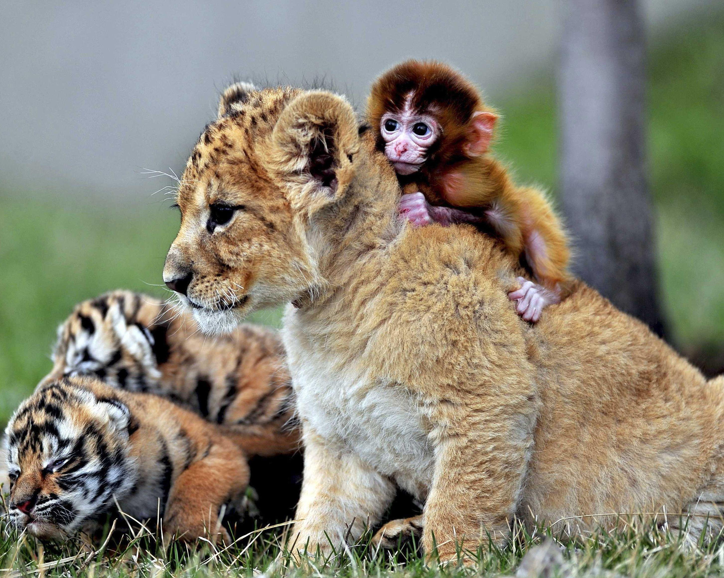 Cute Baby Wild Animals Wallpapers