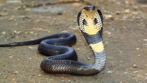 Image result for snakes hd images