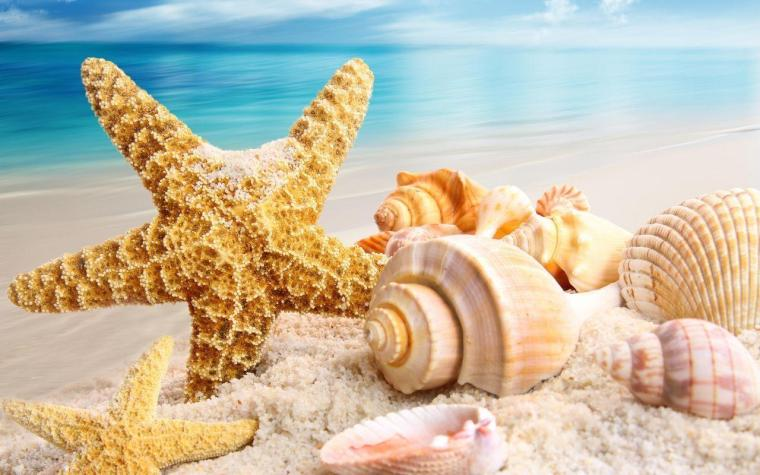 Beautiful Shells Summer Wallpapers, Summer Wallpapers | HD ...