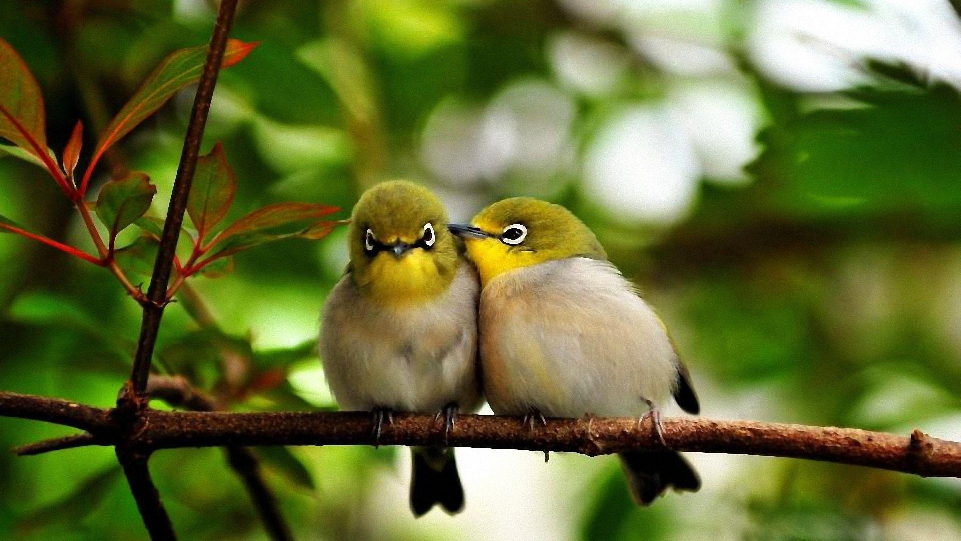 Birds Hd Wallpapers Desktop Wallpaper Cave