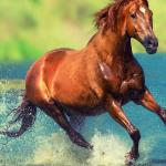 Running Horse Wallpapers Wallpaper Cave