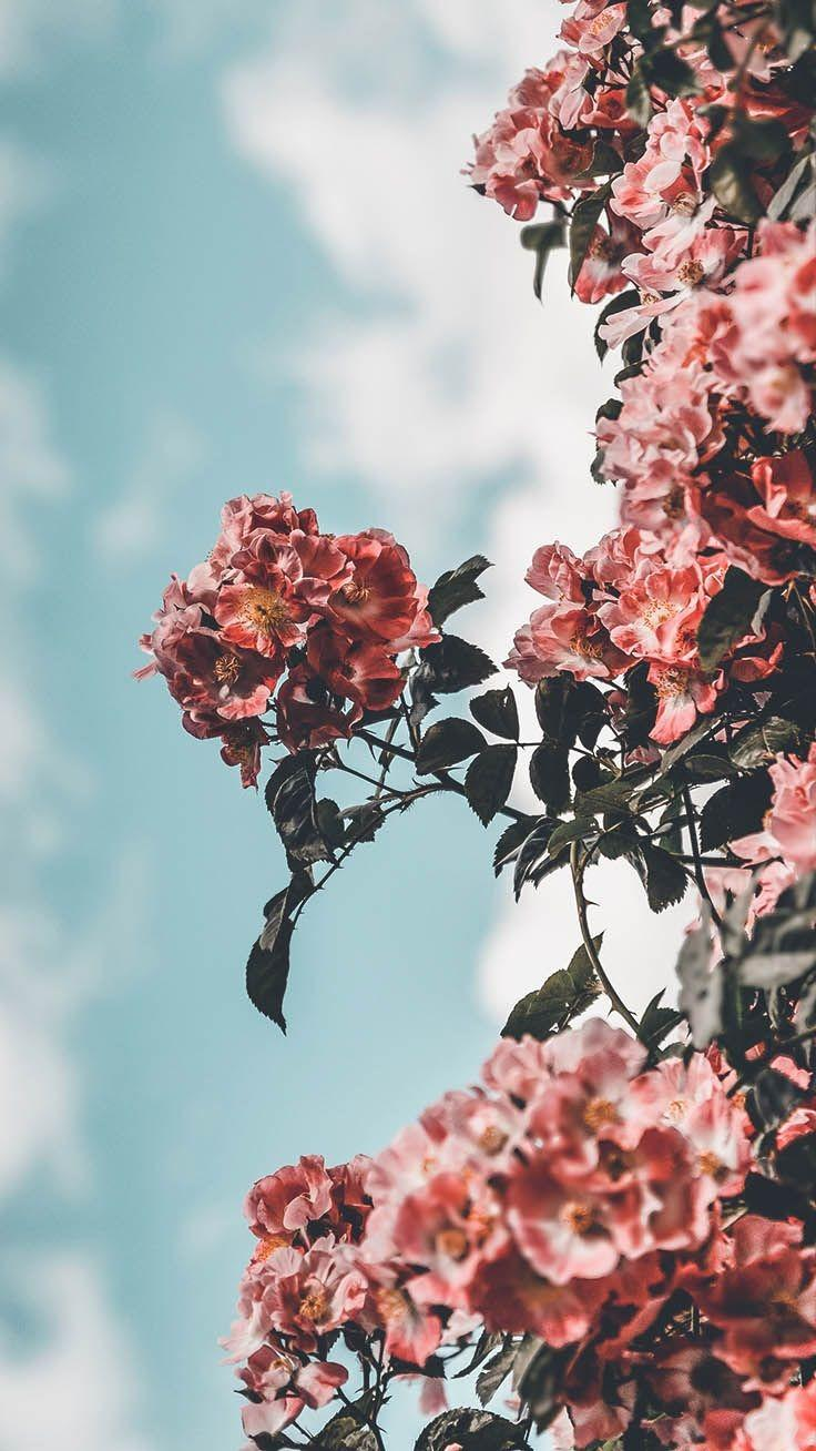 Fall wallpaper flower iphone spring aesthetic background pastel rainbow wallpaper tumblr rainbow roses wallpaper 48 images color wallpapers free hd download 500 hq unsplash. Flower Aesthetic Wallpapers - Wallpaper Cave