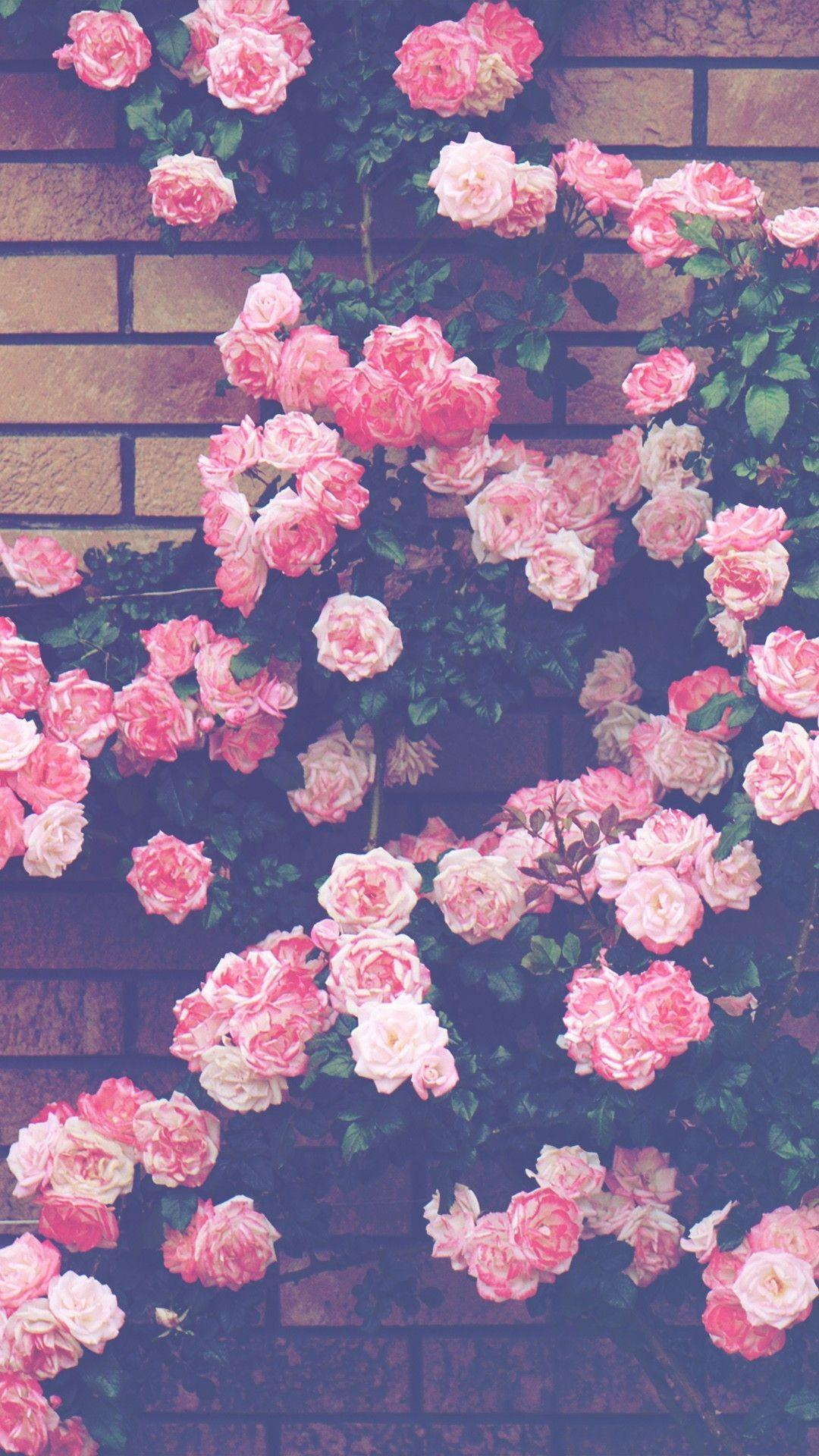 If you love clouds, the moon, stars, flowers, nature, or simple backgrounds, this is the place for you! Aesthetic Pink Roses Wallpapers - Wallpaper Cave