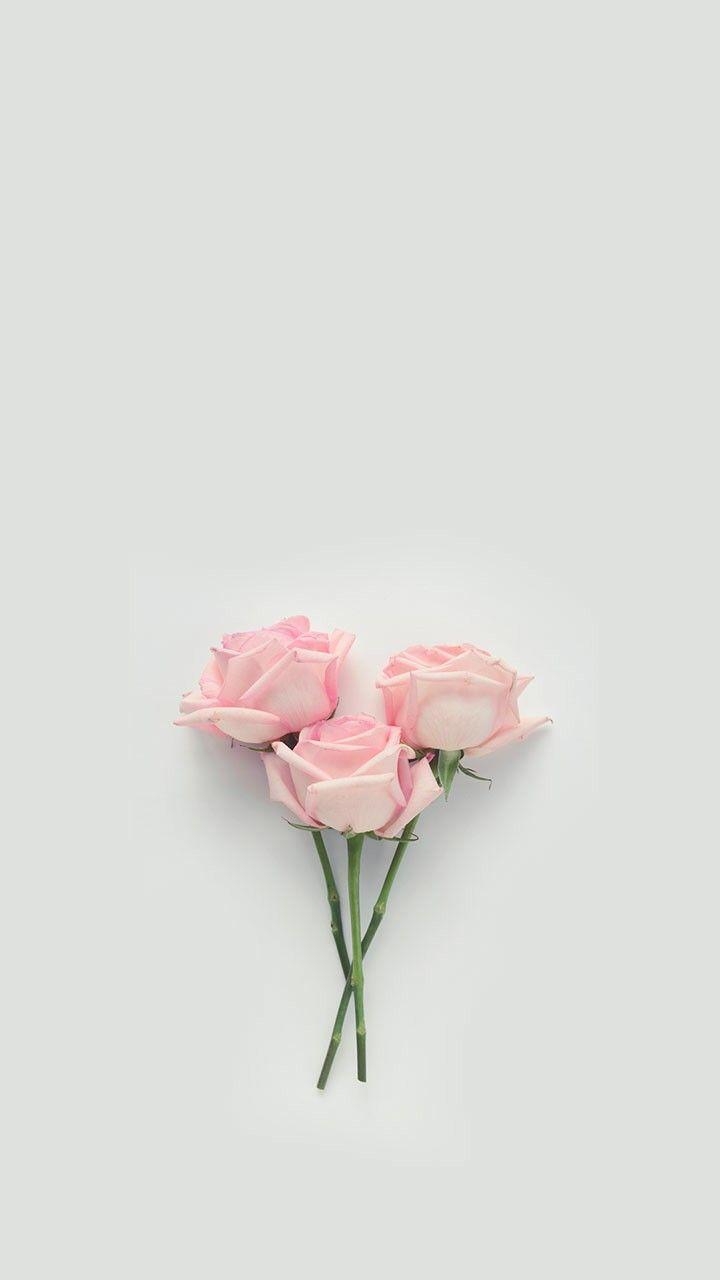 Plant aesthetic flower aesthetic aesthetic images aesthetic backgrounds aesthetic iphone wallpaper aesthetic wallpapers sky aesthetic journal aesthetic aesthetic painting. Aesthetic Pink Roses Wallpapers - Wallpaper Cave