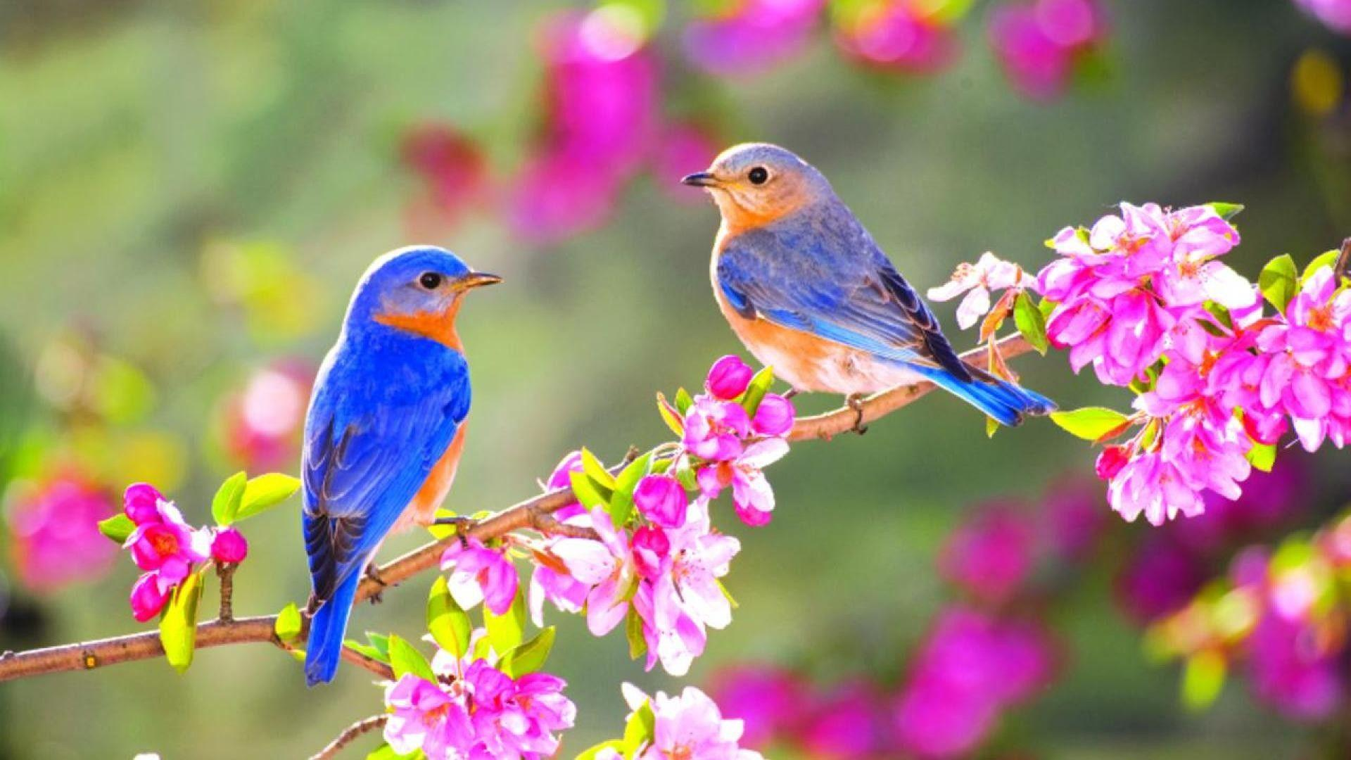 Desktop Birds Wallpapers Wallpaper Cave