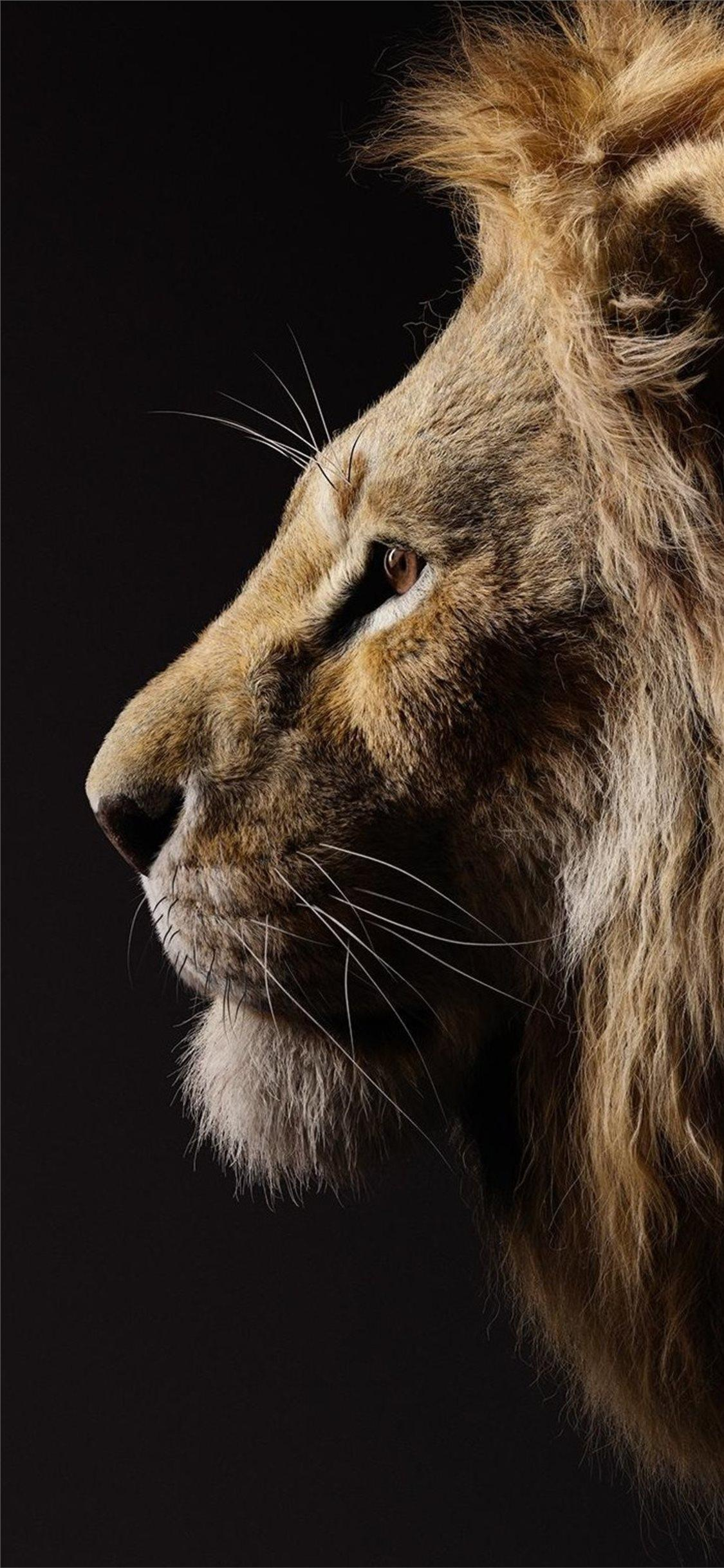 Lion King Iphone Lock Screen Lion Wallpaper Hd Novocom Top