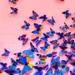 Purple Butterfly Tumblr Wallpapers Wallpaper Cave