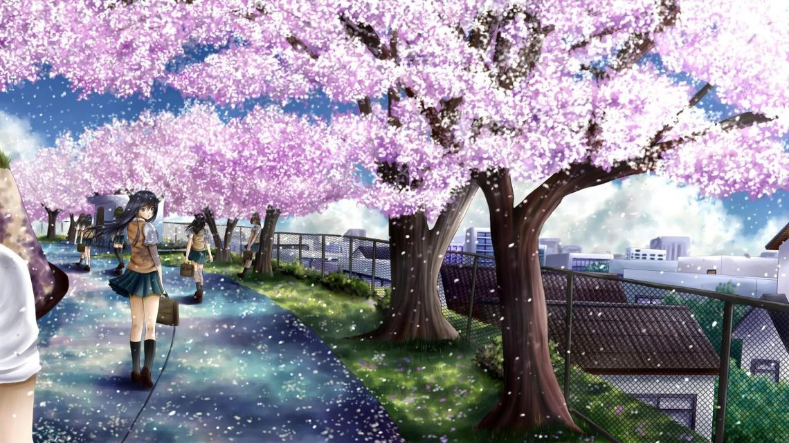Anime Love Cherry Blossom Wallpapers Wallpaper Cave