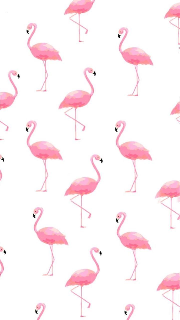 Cute macbook wallpaper for windows. Easter Flamingos Wallpapers - Wallpaper Cave