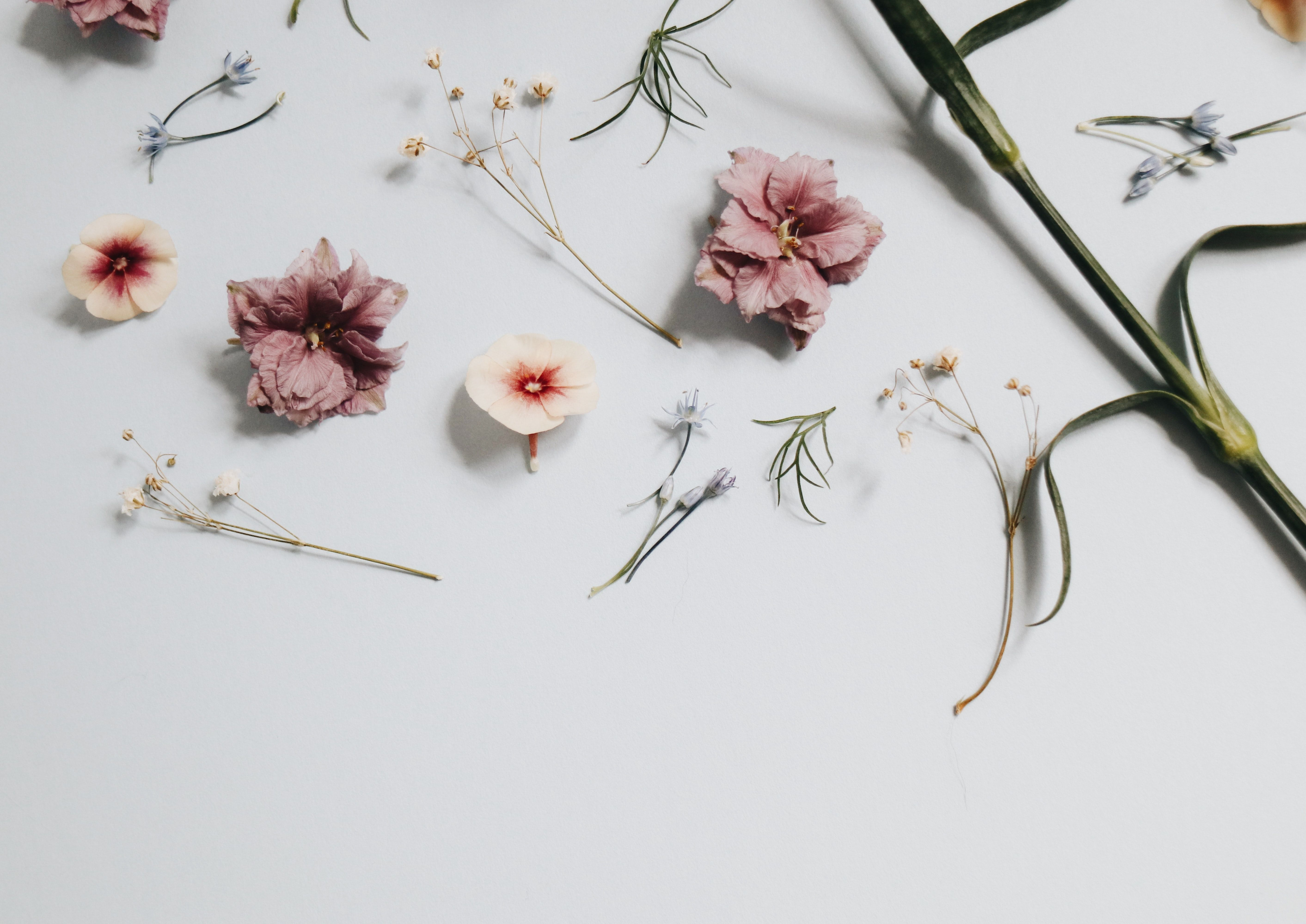 Hd wallpapers and background images Minimalist Floral Laptop Wallpapers - Wallpaper Cave