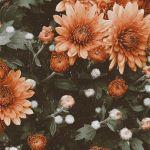 Vintage Flower Aesthetic Wallpapers Wallpaper Cave