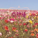 Aesthetic Red Flower Field Wallpapers Wallpaper Cave