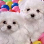 Cute Puppies Wallpapers Wallpaper Cave