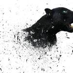 Black Jaguar Hd Wallpaper Auto Search Image