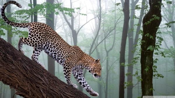 Jungle Animal Wallpaper | Wallpaper Rasim