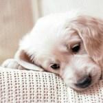 Puppy Desktop Backgrounds 78 Pictures