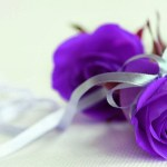 Purple Rose Background 52 Pictures