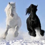Clydesdale Wallpaper 49 Pictures