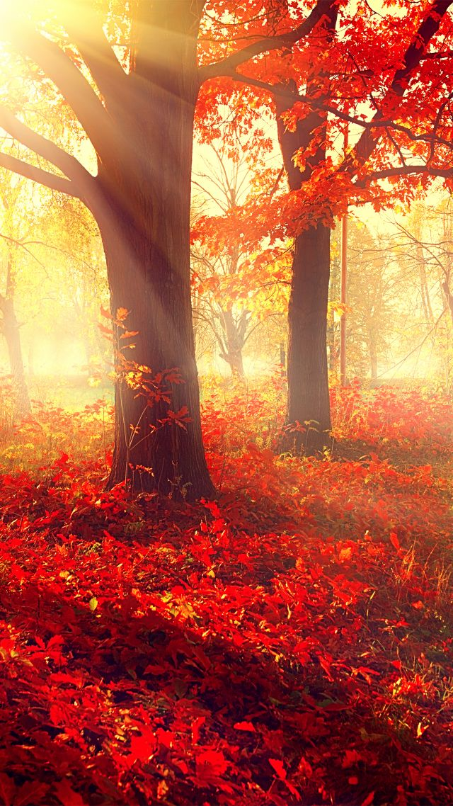 Wallpaper park  5k  4k wallpaper  autumn  beautiful  leaves  trees         5k  4k wallpaper  autumn  beautiful  leaves  trees  vertical