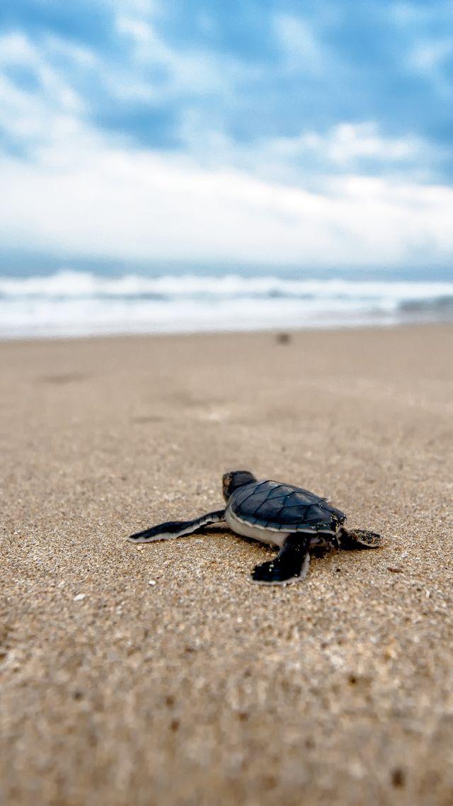 Wallpaper Turtle Beach 4k Animals 15293
