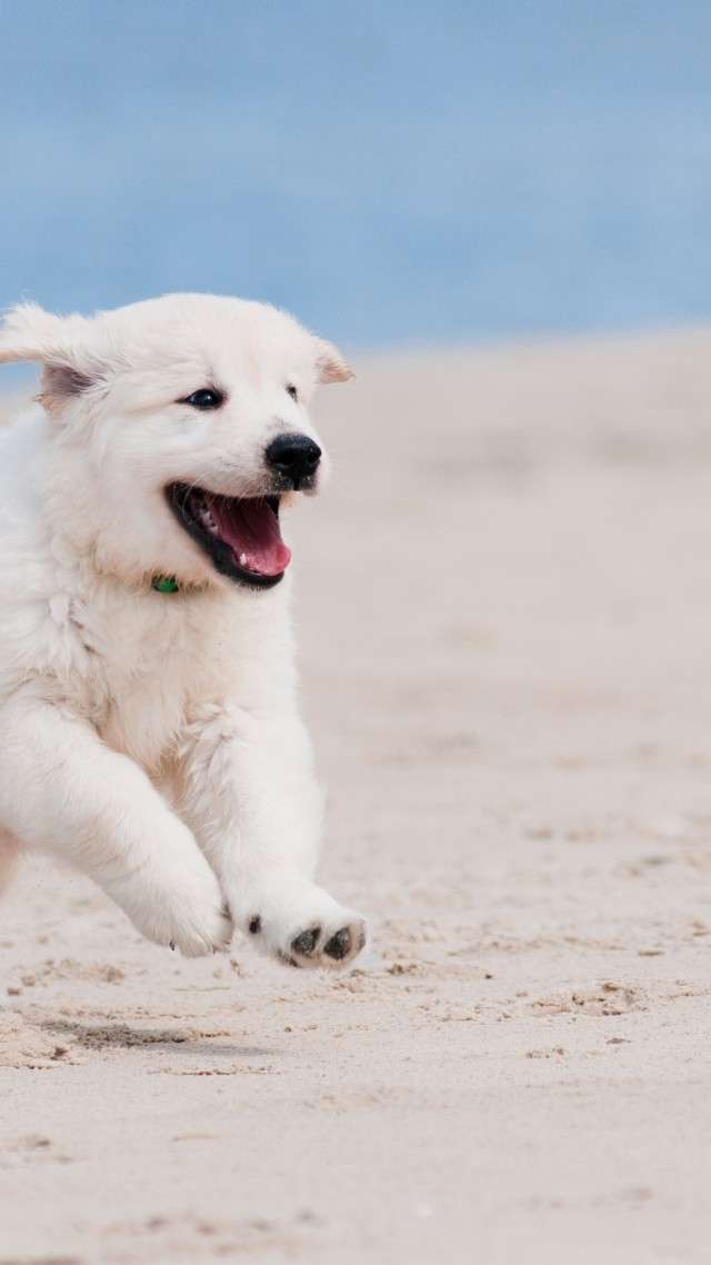 Wallpaper Dog Puppy White Animal Pet Beach Sand Sea
