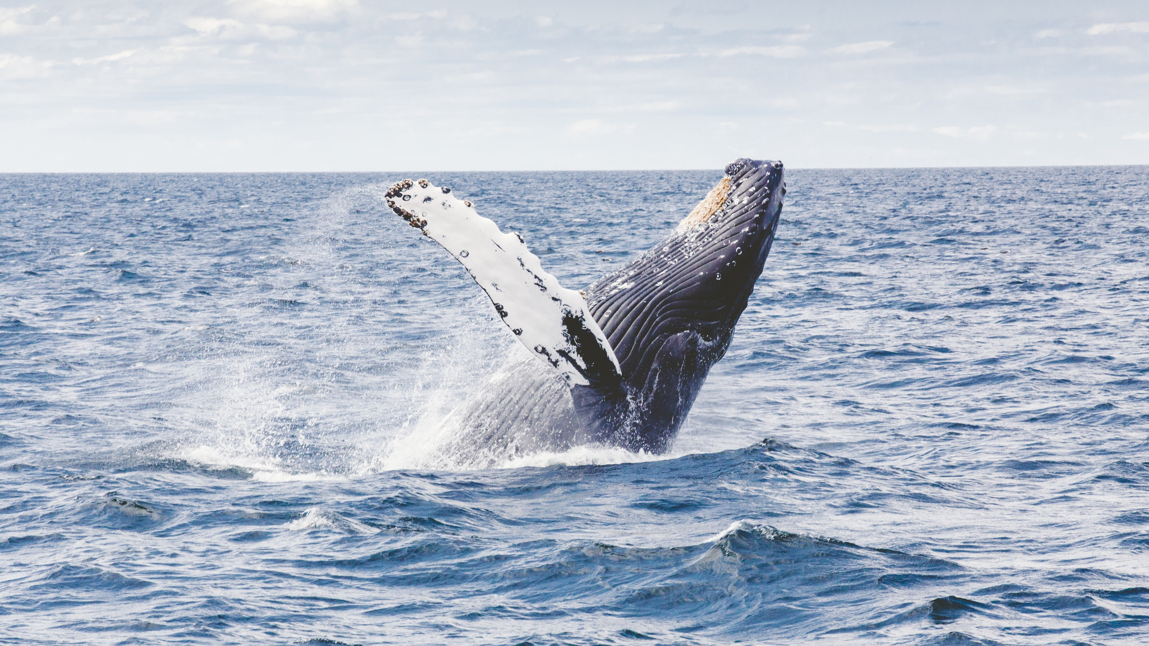 Wallpaper Whale 5k 4k Wallpaper 8k Ocean Nature 12586