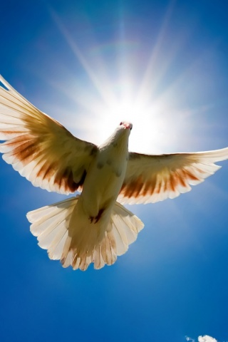 320x480 Dove And The Sun Iphone 3g Wallpaper