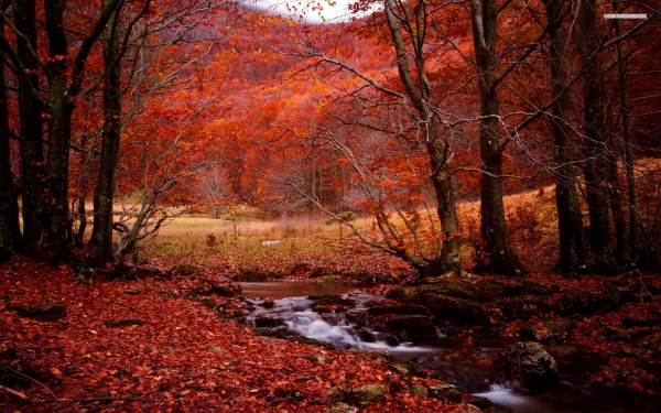 Red Forest Creek Leaves Stones wallpapers | Red Forest ...