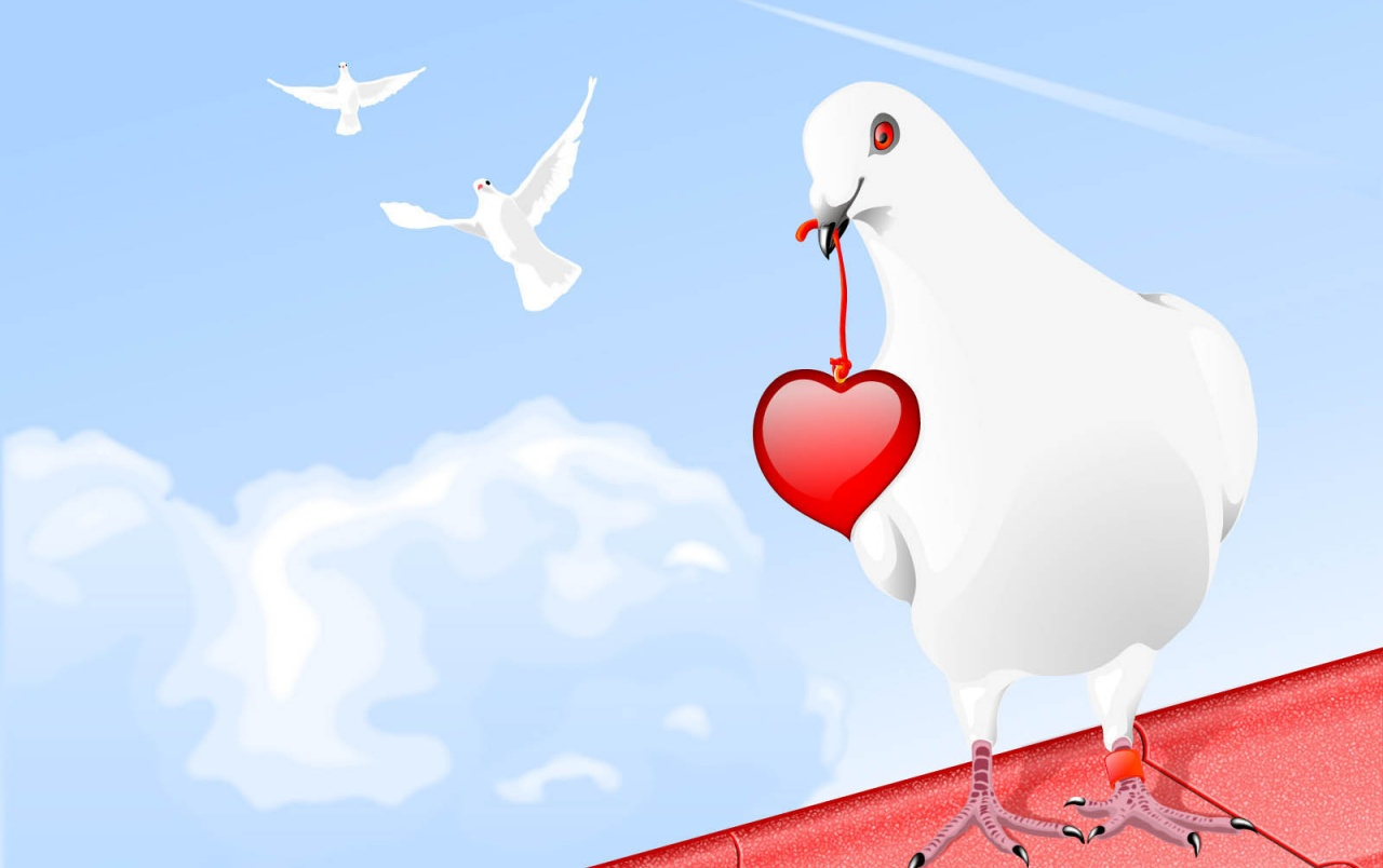 White Dove And Heart Wallpapers White Dove And Heart