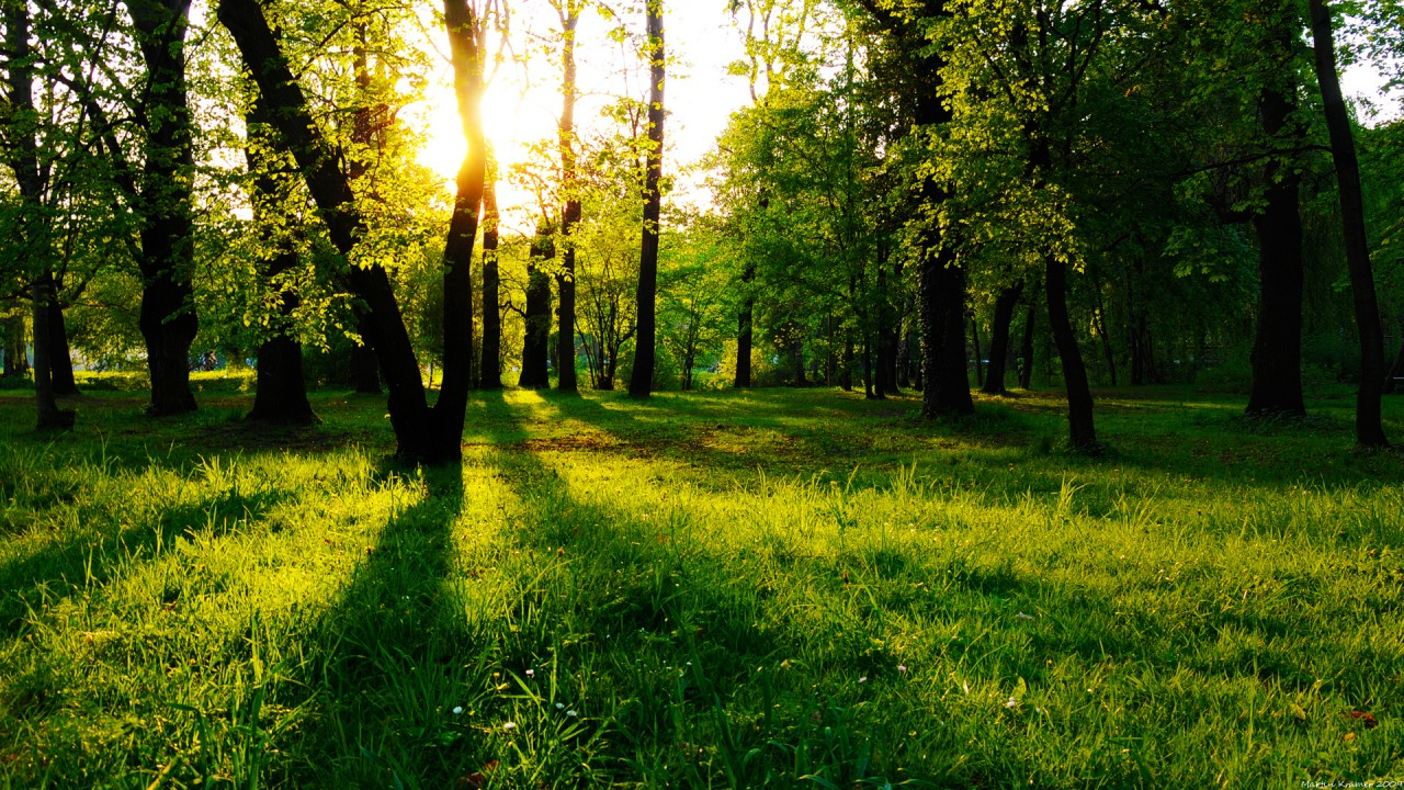 Nice Forest Meadow Sunny Jena wallpapers
