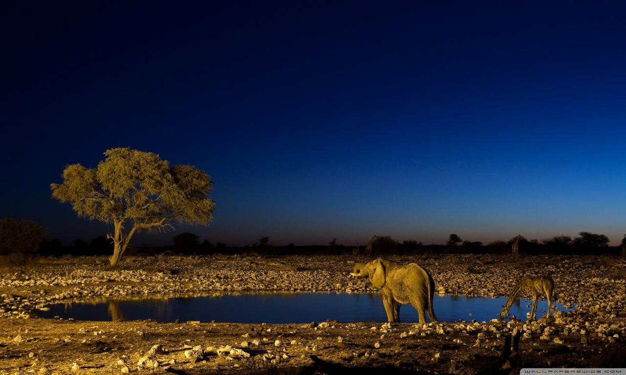 African Elephants HD desktop wallpaper : High Definition ...