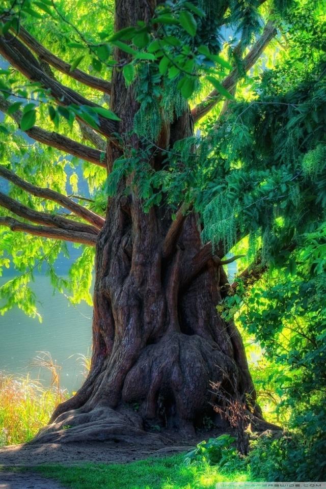 Tree And Field Hd Wallpaper