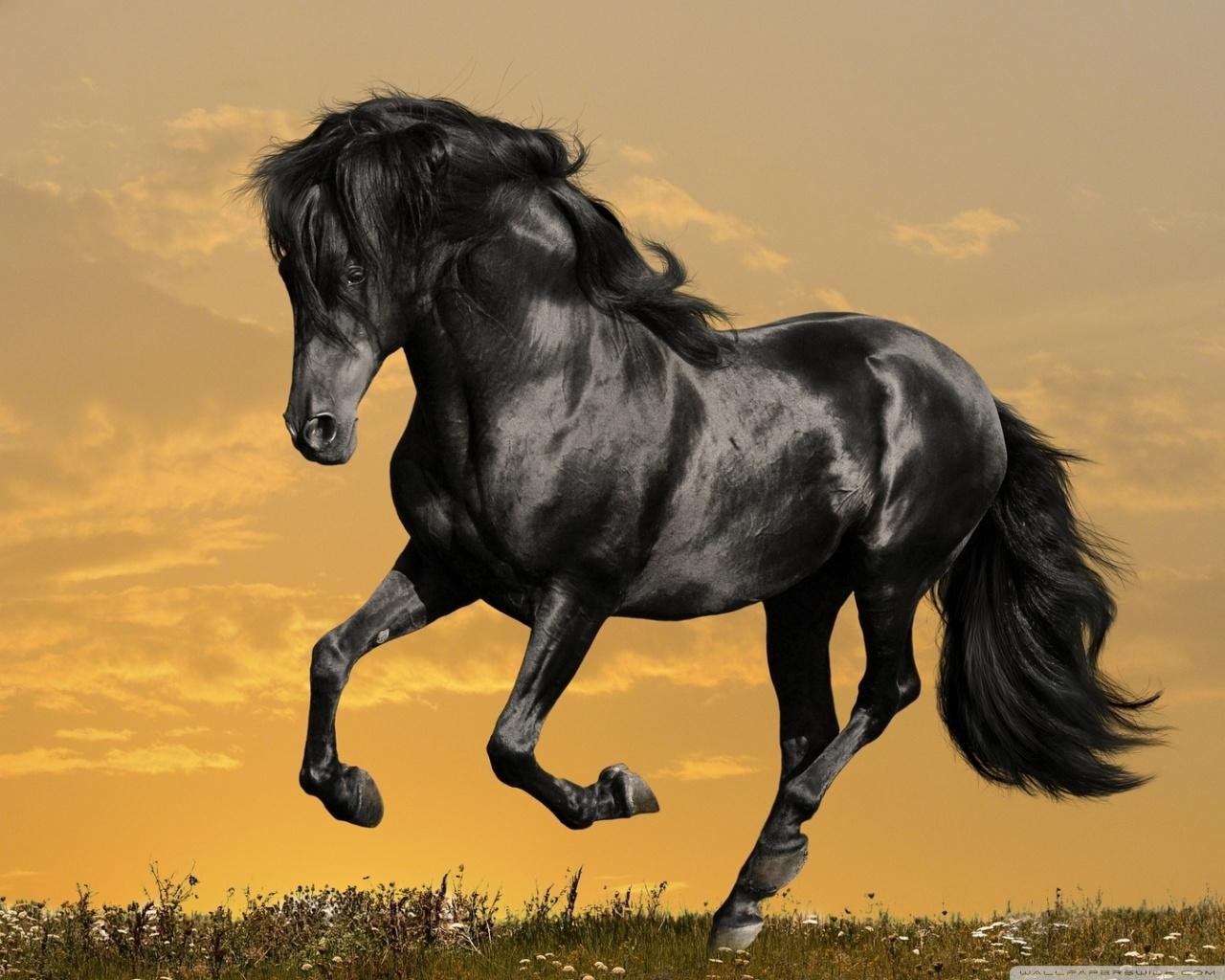 black horse running ❤ uhd desktop wallpaper for ultra hd 4k 8k