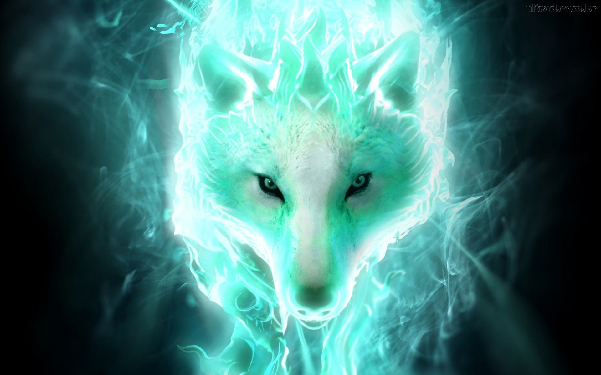 Really Cool Wolf Pictures