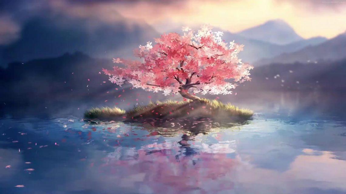 Lone Cherry Blossom Tree Live Wallpaper Wallpaperwaifu