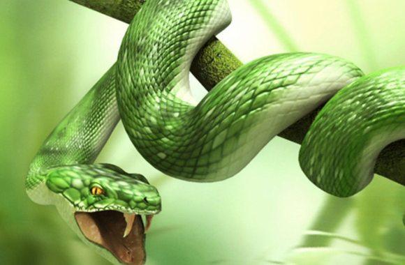 3D Snake Animals Wallpapers HD Widescreen