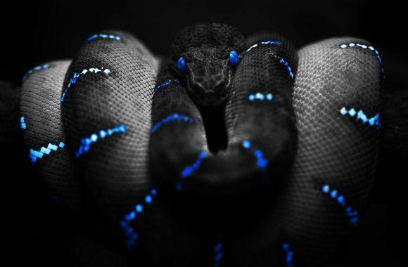 Amazing HD Wallpaper Of Black Snake Gallery
