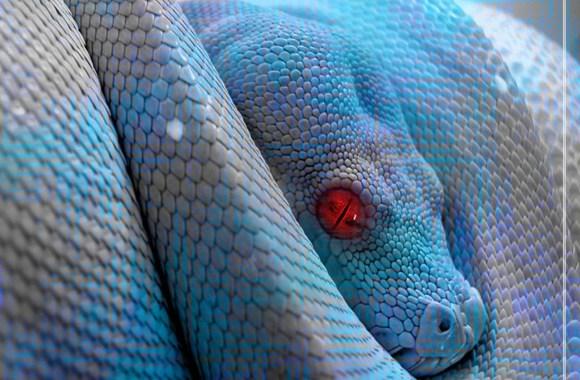 Animals Reptiles Blue Snake Red Eyes Wallpaper