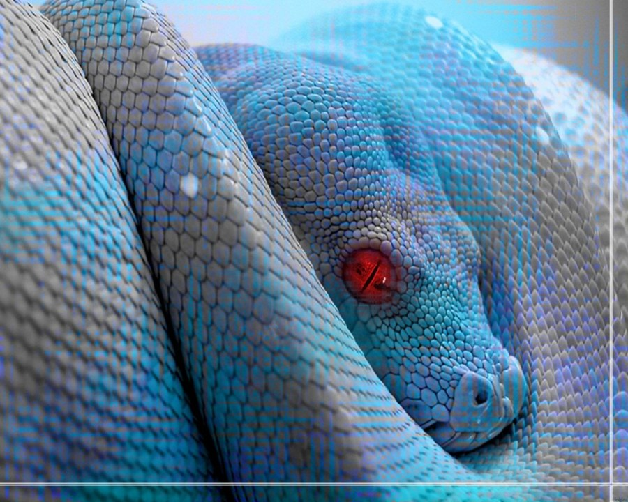 Animals Reptiles Blue Snake Red Eyes Wallpaper