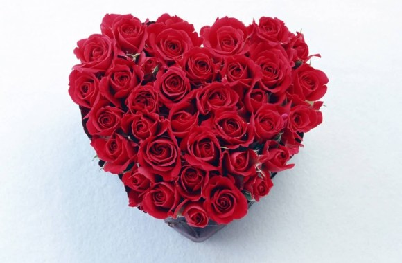 Roses Love Pictures Rose Flower Images Free Download