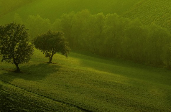 Green Nature 3D HD Wallpapers For Your Windows 8