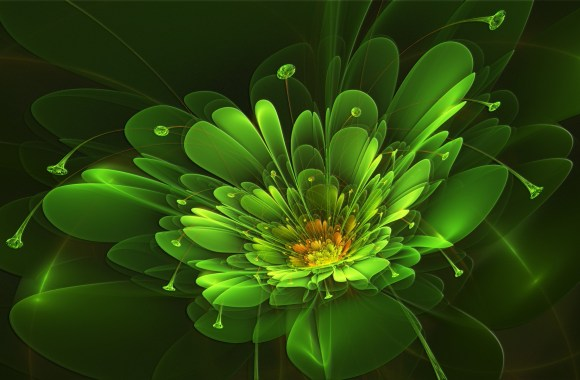 Green Flower Abstract Fresh New HD Wallpaper Best Quality