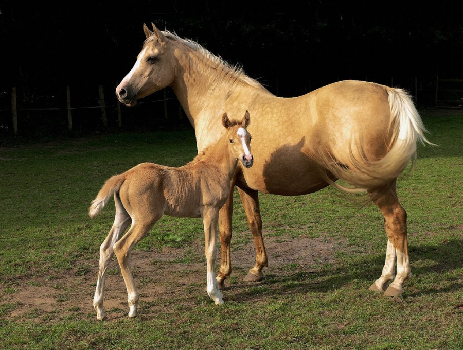 Awesome Two Horses In One Picture Free Download
