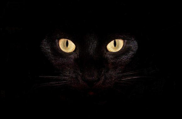 Eyes Cat Animal HD Wallpaper Black Background Free