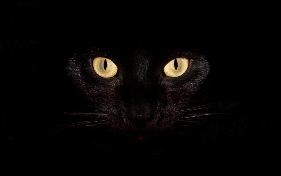Eyes Cat Animal HD Wallpaper Black Background Free