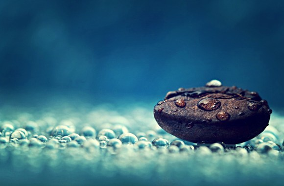 Coffee Photography Water Drops Macro Seeds Dew HD Wallpaper