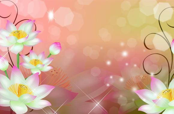 Beautiful White Flowers Abstract HD Wallpaper Image Picture