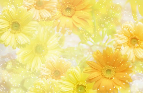 Yellow Flower Color HD Wallpaper Widescreen For Your PC Desktop